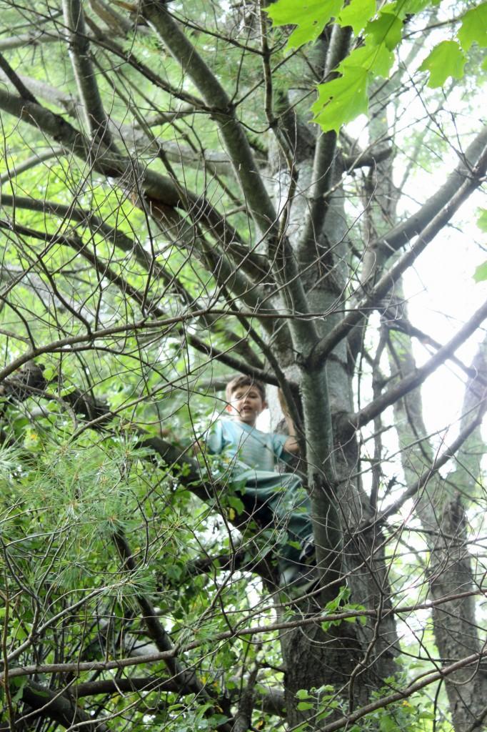 Elijah tree